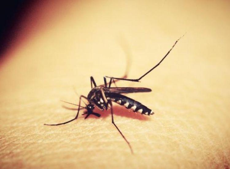 Νέο κρούσμα του  ιού του Δυτικού Νείλου-Στην εντατική ένα πρόσωπο