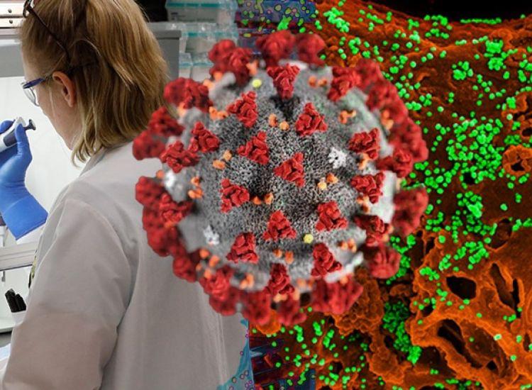 Covid-19: Πρόοδος στην παρασκευή αντισωμάτων για δημιουργία εμβολίου