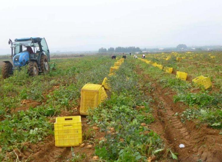 """Αγρότες Αμμόχωστος: """"Αποζημιώσεις άμεσα""""!"""