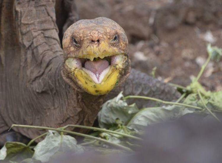 H χελώνα με την αχαλίνωτη σεξουαλική ζωή που έσωσε το είδος της από εξαφάνιση