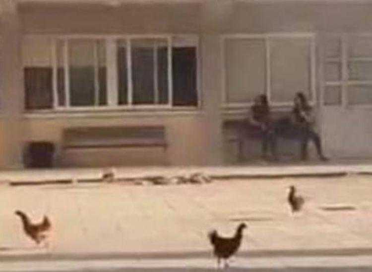 Παραλίμνι: Έρευνα για το περιστατικό με τις κότες και τα κουνέλια διέταξε ο Προδρόμου