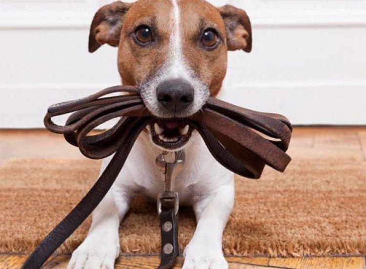 Τι ισχύει για τους περιπάτους των σκύλων μετά τις 9:00 το βράδυ