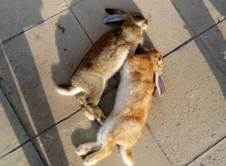 Λύκειο Παραλιμνίου: Νέες φωτογραφίες από τα νεκρά ζώα