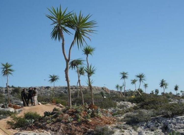 Αγία Νάπα: Προχωρεί στην φύτευση 15 χιλιάδων δέντρων!