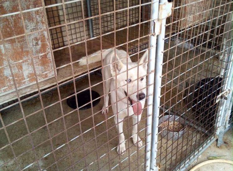 Χάθηκαν δύο σκυλιά στη Δερύνεια - Γνωρίζετε τον ιδιοκτήτη; (photos)