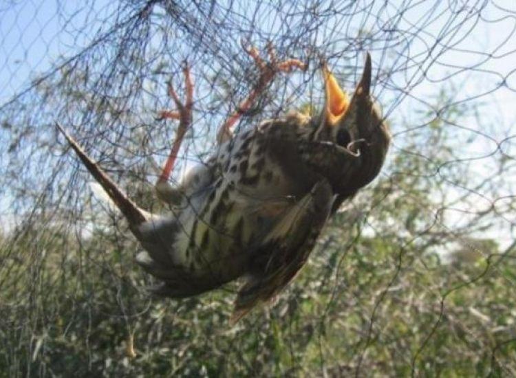 Πρόστιμο χιλιάδων ευρώ σε τρία άτομα για παγίδευση πουλιών