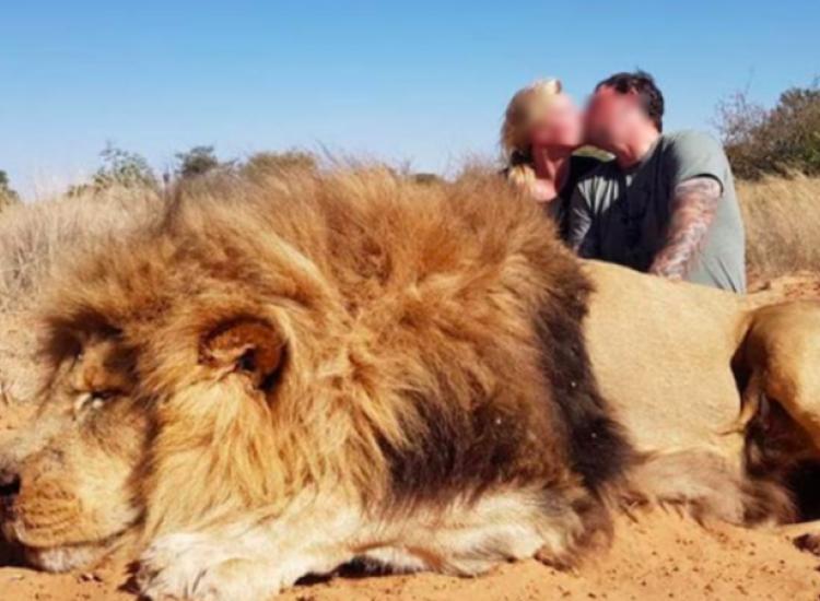 Σάλος για το ζευγάρι που φιλήθηκε πάνω από νεκρό λιοντάρι