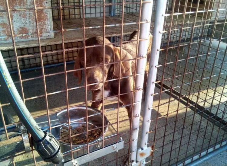Χάθηκε σκυλάκι στη Δερύνεια (photo)