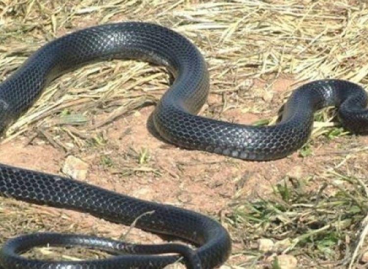 Πότε θα ξυπνήσουν τα φίδια