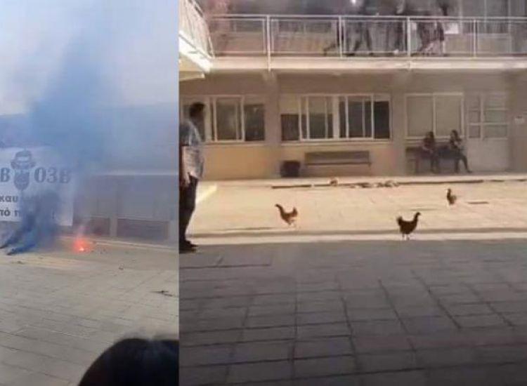 Λύκειο Παραλιμνίου: Νύχτα πήραν τα ζώα στο σχολείο