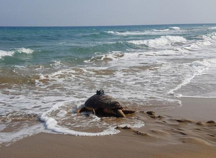 Από Κάβο Γκρέκο... Πάφο ο Πάμπος, η «ταξιδιάρα χελώνα» (χάρτης)