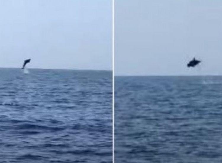 Μακροβούτια δελφινιών στο Κάβο Γκρέκο (ΒΙΝΤΕΟ)