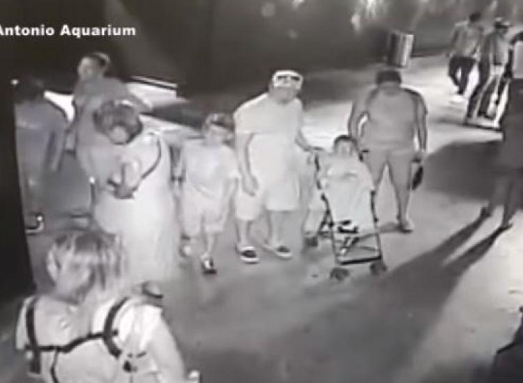 Έκλεψαν καρχαρία από ενυδρείο και τον έντυσαν «μωρό» (vid)