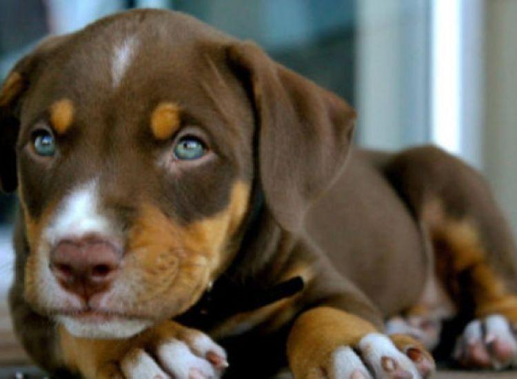 Πυροβόλησε εν ψυχρώ δυο σκυλιά γιατί του έφαγαν κουνέλια