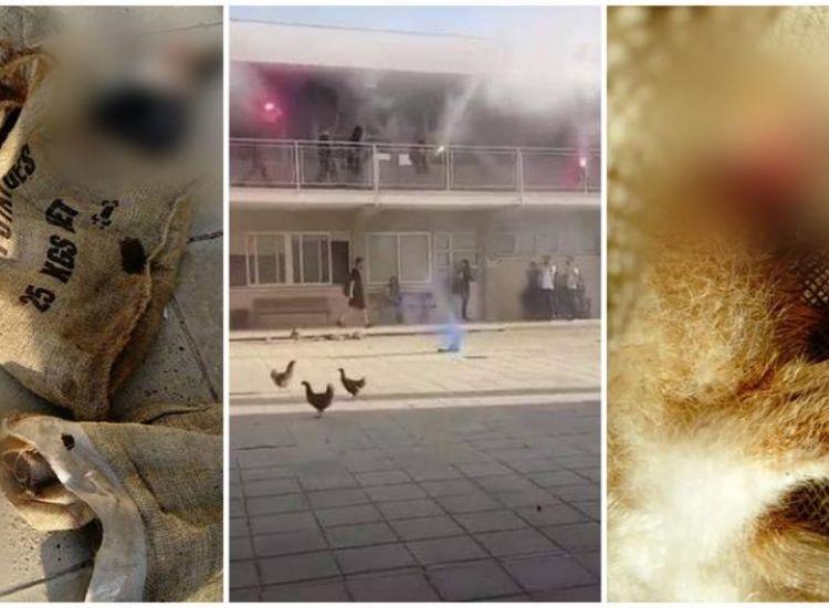 Μαθητές παραδέχτηκαν εμπλοκή στα έκτροπα του Λυκείου Παραλιμνίου (ΒΙΝΤΕΟ)
