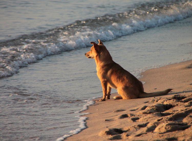 Τελείωσε η γενική απαγόρευση των σκύλων στις παραλίες