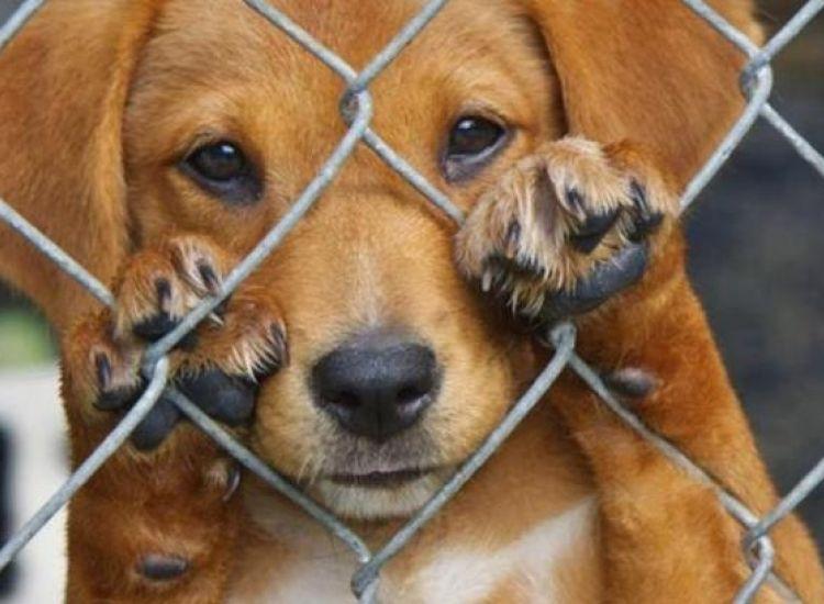 27 καταγγελίες φέτος για κακοποίηση ζώων