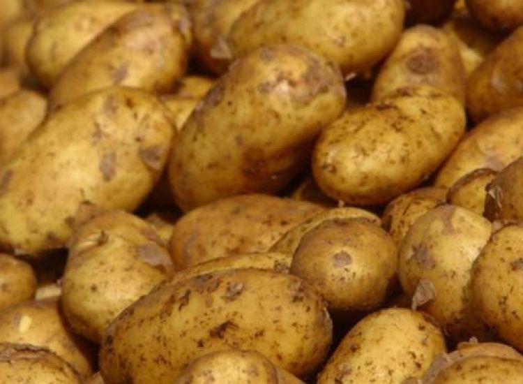 Υπουργικό: Καταβολή αποζημιώσεων για τις πατάτες