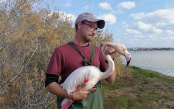 Παραλίμνι: Δεν θα πετάξει ξανά το φλαμίνγκο που πυροβολήθηκε