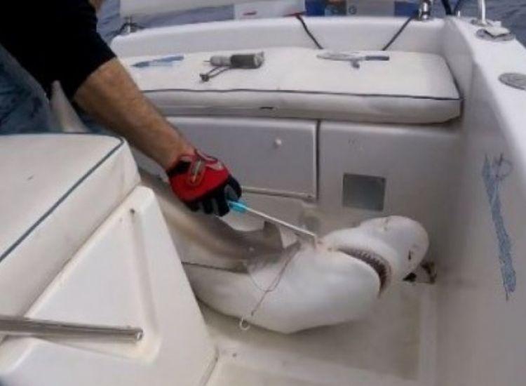 Κύπρος: Καρχαρίας 1,5 km από την ακτή! Τον «ψάρεψαν» Κύπριοι(video)