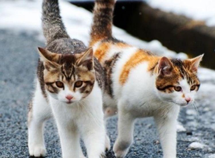 Συνάντηση Καρούσου-Κόμματος για τα Ζώα με αφορμή δηλητηριάσεις γάτων
