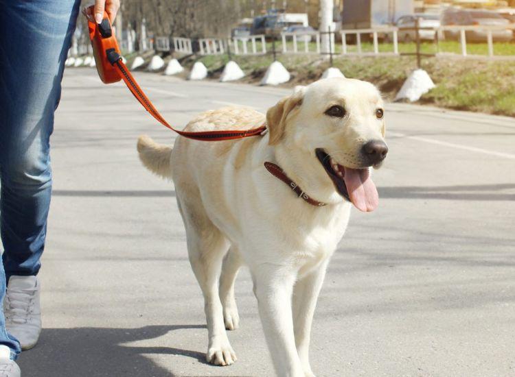 Μετά τα διατάγματα... αυξήθηκαν οι ενδιαφερόμενοι για υιοθεσία σκύλων