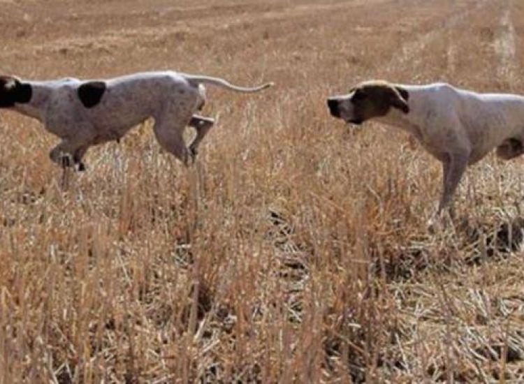 Επ. Αμμοχώστου: Έκλεψαν επτά σκύλους από περιβόλι