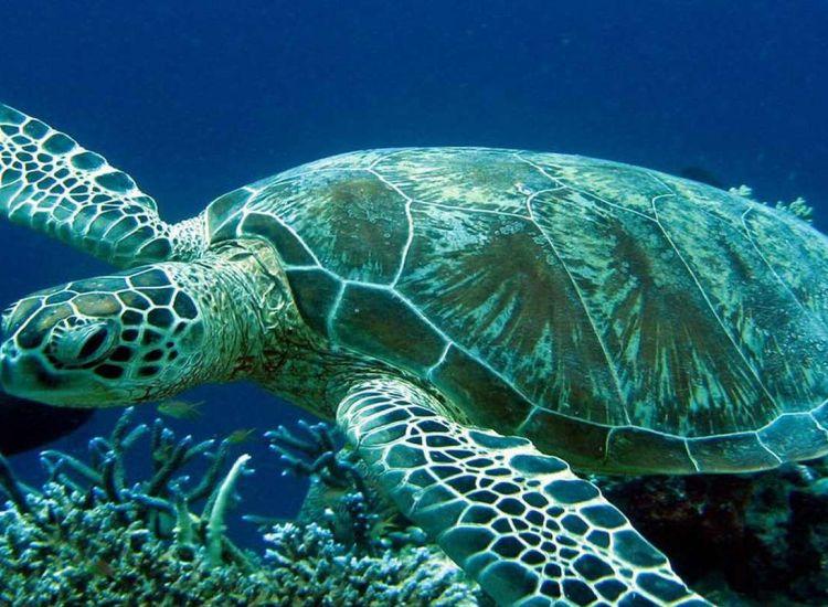 Oι χελώνες ξανά στο Παραλίμνι! Μαγικές εικόνες μέσα από το νερό! (pics & video)