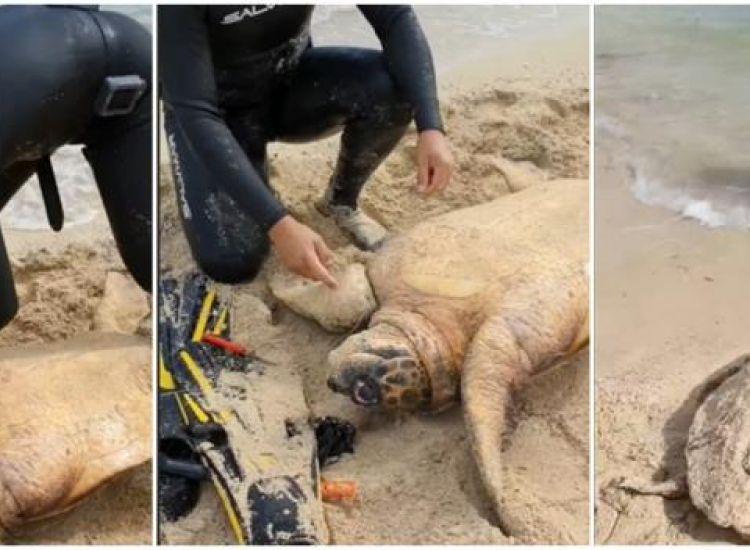 Ψαράς από το Λιοπέτρι σώζει χελώνα που πιάστηκε στα δίχτυα