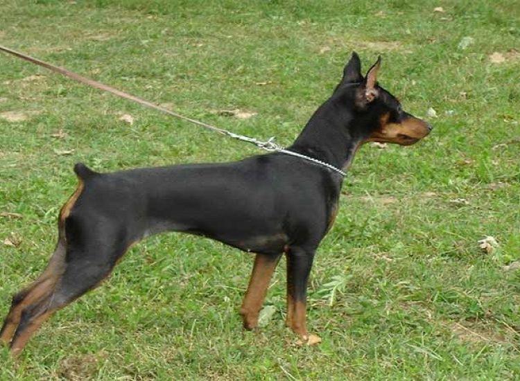 ΚΥΠΡΟΣ: Μπήκε στο σπίτι γειτόνισσας και έσφαξε τον σκύλο της
